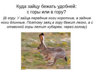 Куда зайцу бежать удобней: с горы или в гору? (В гору. У зайца передние ноги