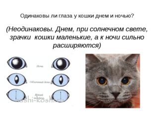 Одинаковы ли глаза у кошки днем и ночью?  (Неодинаковы. Днем, при солнечном