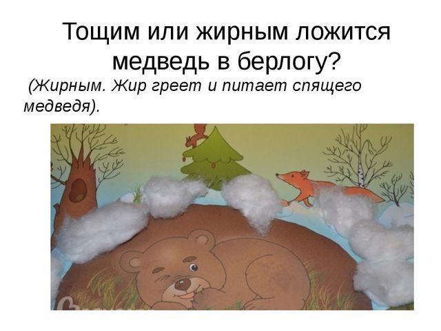 Тощим или жирным ложится медведь в берлогу? (Жирным. Жир греет и питает спящ...