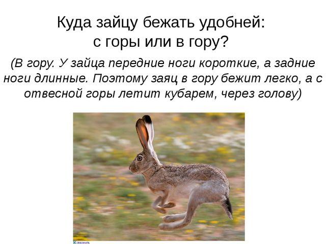 Куда зайцу бежать удобней: с горы или в гору? (В гору. У зайца передние ноги...
