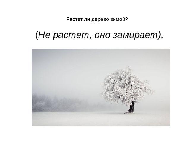 Растет ли дерево зимой?  (Не растет, оно замирает).