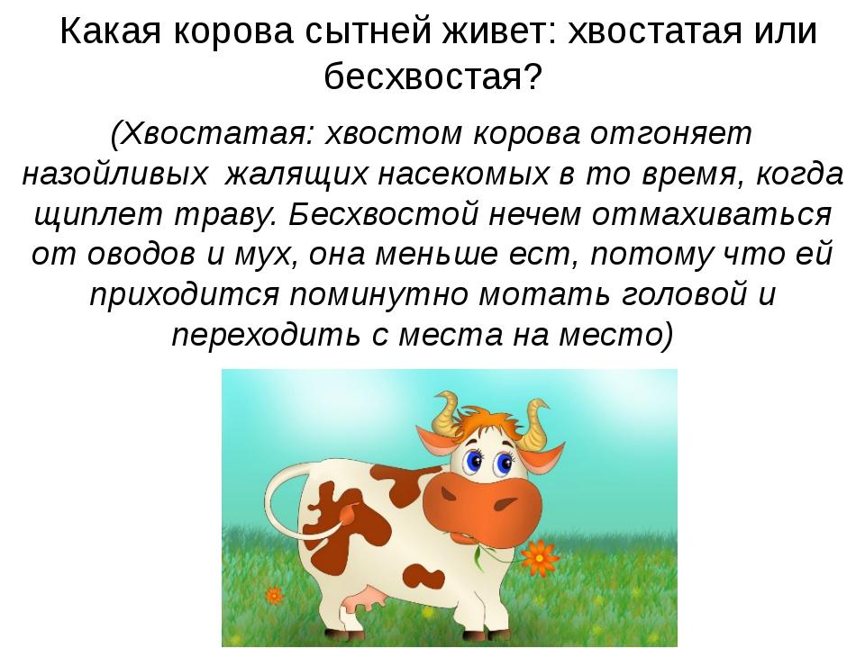 Какая корова сытней живет: хвостатая или бесхвостая? (Хвостатая: хвостом кор...