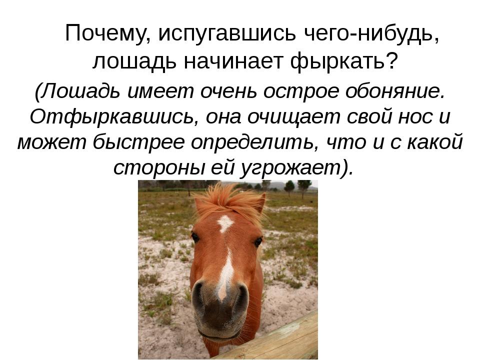 Почему, испугавшись чего-нибудь, лошадь начинает фыркать? (Лошадь имеет оче...