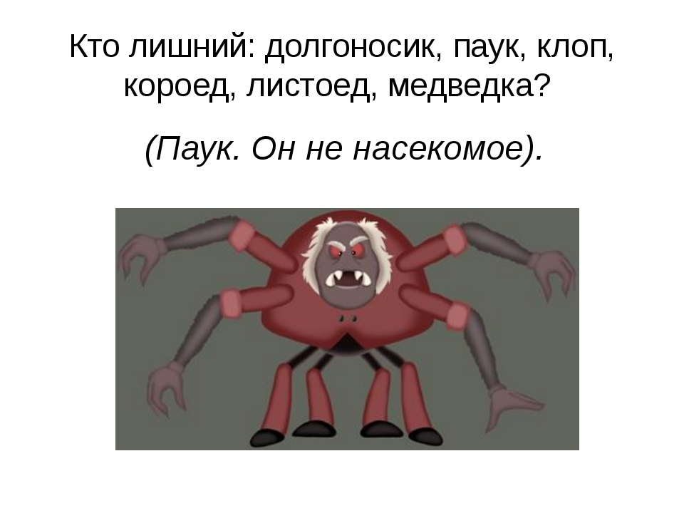 Кто лишний: долгоносик, паук, клоп, короед, листоед, медведка? (Паук. Он не н...