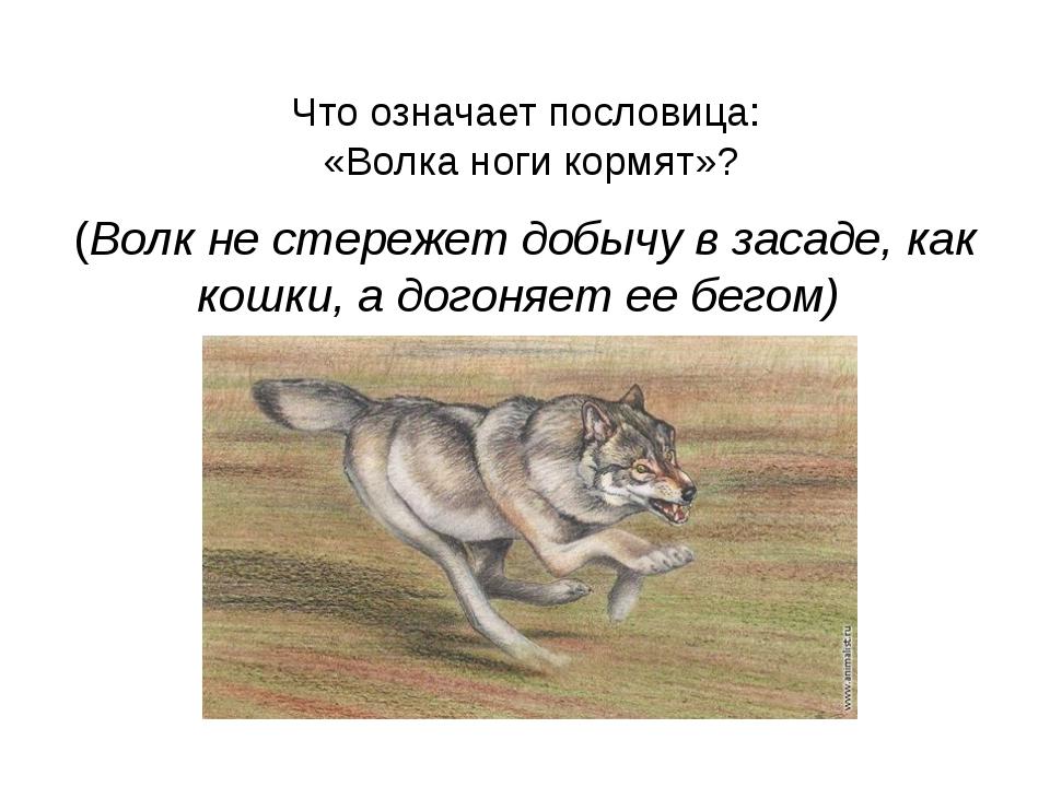 Что означает пословица: «Волка ноги кормят»? (Волк не стережет добычу в заса...