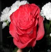 C:\Users\14\Desktop\pictures\сурет\Новая папка\flowers_137.jpg