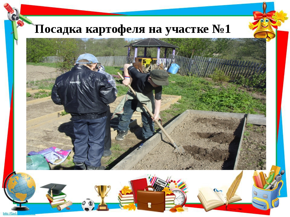 Посадка картофеля на участке №1