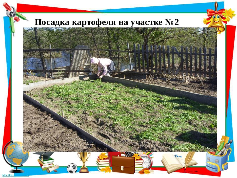 Посадка картофеля на участке №2