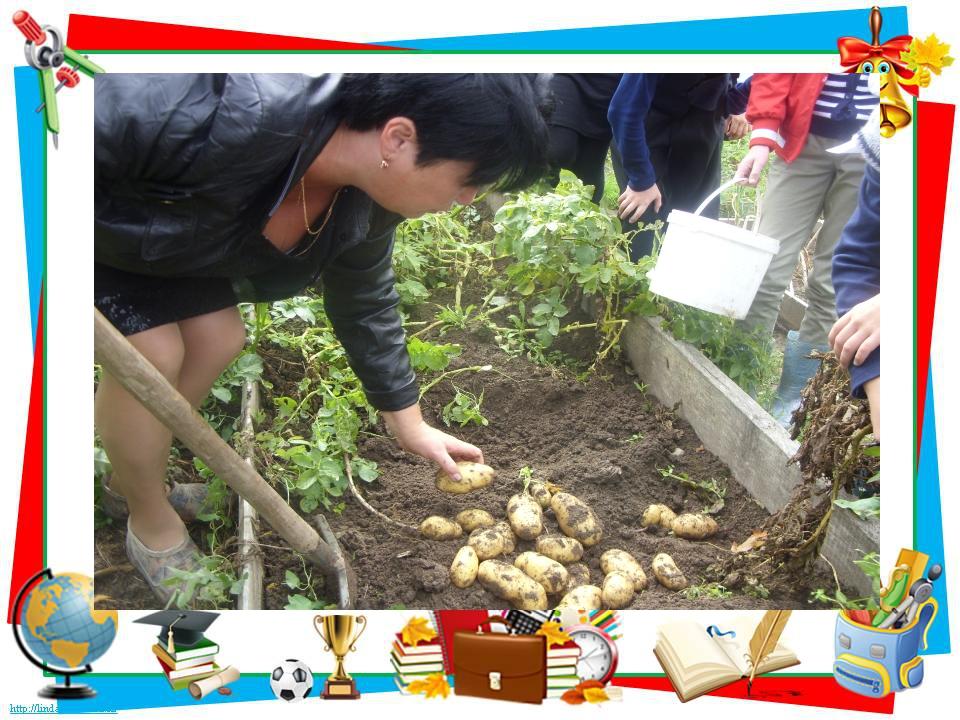Нетрадиционные технологии выращивания картофеля 77