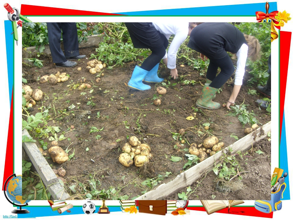 Нетрадиционные технологии выращивания картофеля 83