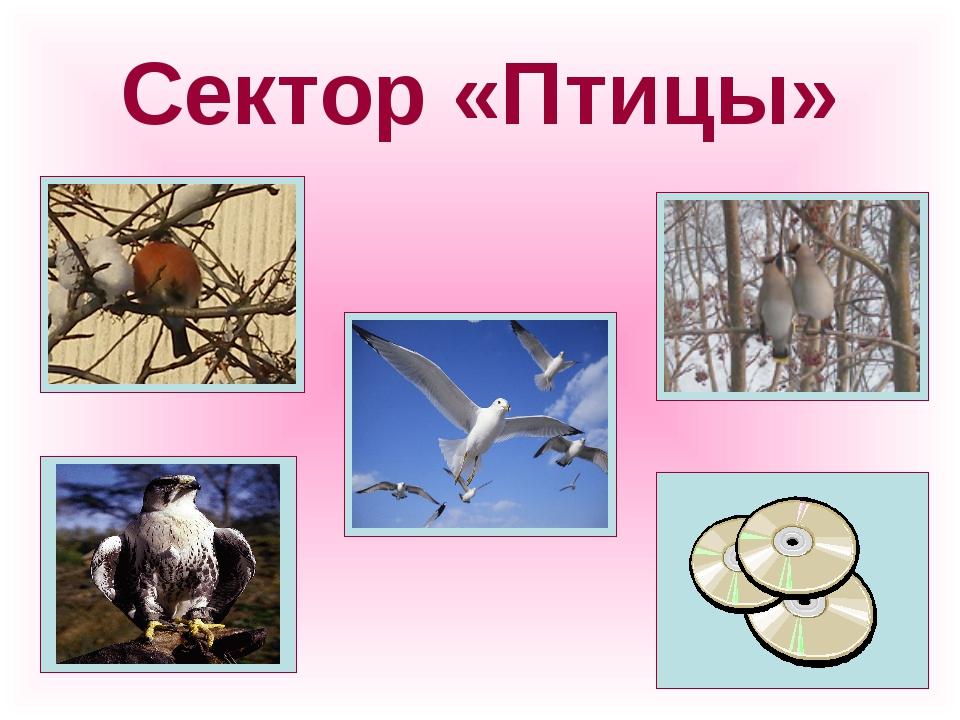 Сектор «Птицы»