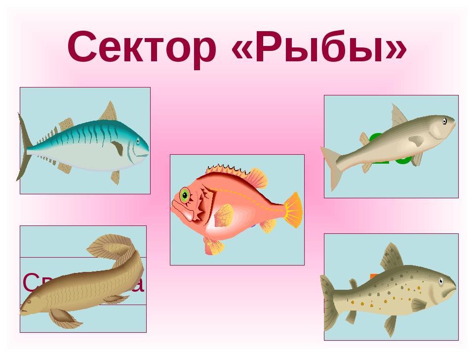 Сектор «Рыбы» Своя игра
