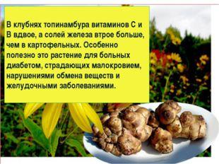 В клубнях топинамбура витаминов С и В вдвое, а солей железа втрое больше, чем