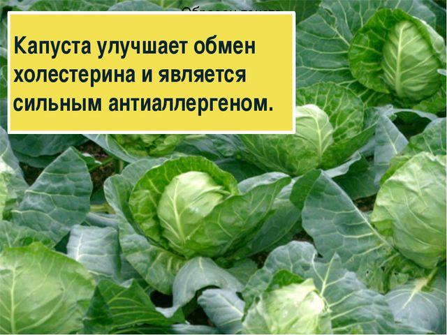 Капуста улучшает обмен холестерина и является сильным антиаллергеном.