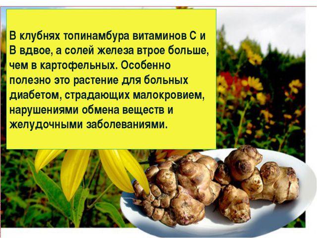 В клубнях топинамбура витаминов С и В вдвое, а солей железа втрое больше, чем...