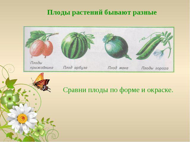 Плоды растений бывают разные Сравни плоды по форме и окраске.