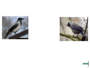 Узнай и назови всеядных птиц.