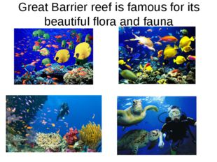 Great Barrier reef is famous for its beautiful flora and fauna