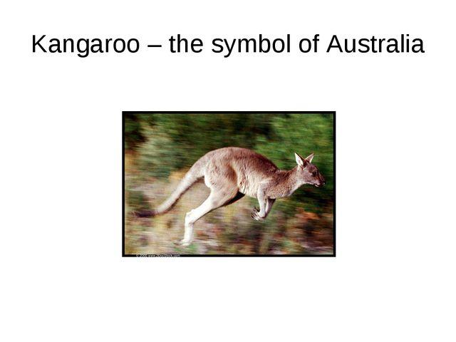 Kangaroo – the symbol of Australia