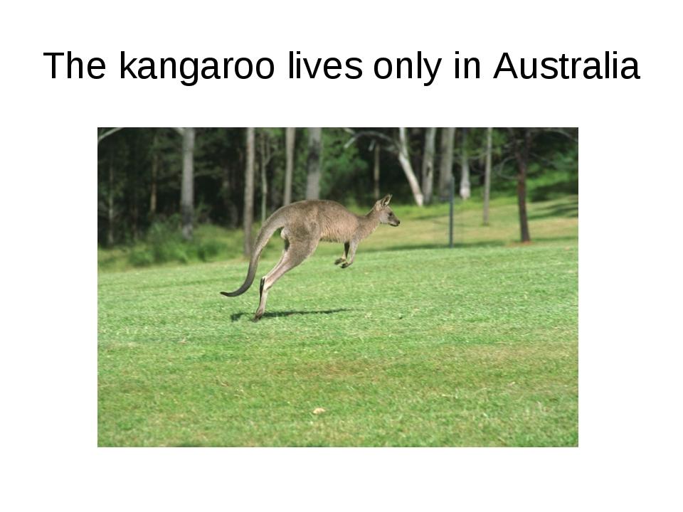 The kangaroo lives only in Australia