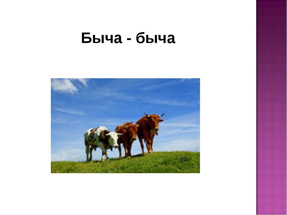Быча - быча