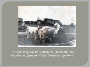 Татьяна Ильинична Сорокина (Пелевина) на пастбище. Деревня Гари, Вичугского р