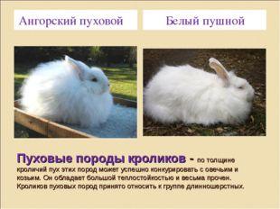Пуховые породы кроликов - по толщине кроличий пух этих пород может успешно ко