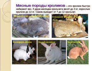 Мясные породы кроликов – эти кролики быстро набирают вес. К двум месяцам крол