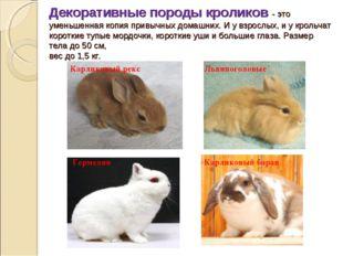 Декоративные породы кроликов -это уменьшенная копия привычных домашних. И у