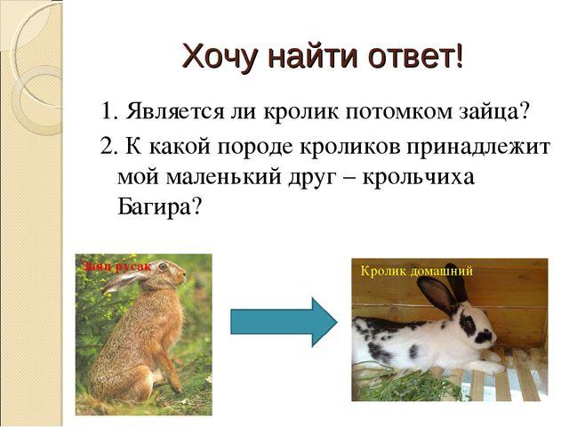 Хочу найти ответ! 1. Является ли кролик потомком зайца? 2. К какой породе кро...