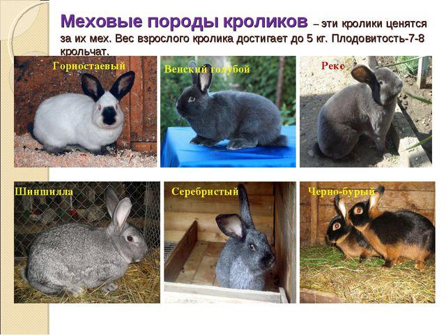 Меховые породы кроликов – эти кролики ценятся за их мех. Вес взрослого кролик...