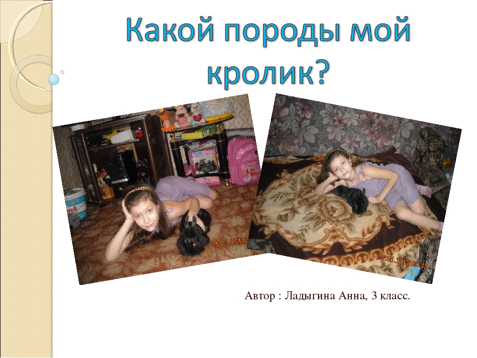 Автор : Ладыгина Анна, 3 класс.