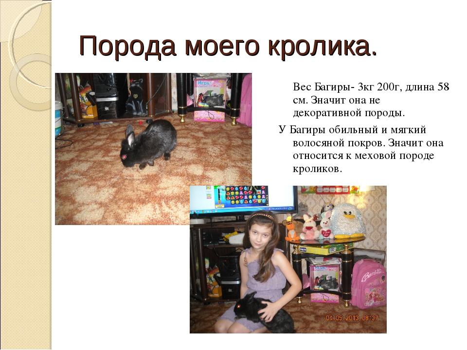 Порода моего кролика. Вес Багиры- 3кг 200г, длина 58 см. Значит она не декора...