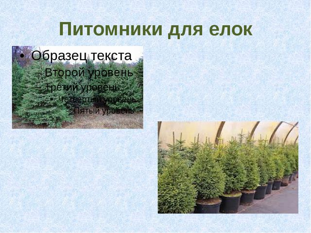 Питомники для елок
