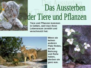 Tiere und Pflanzen kommen in Gefahr, weil man ihren Lebensraum zerstört und v