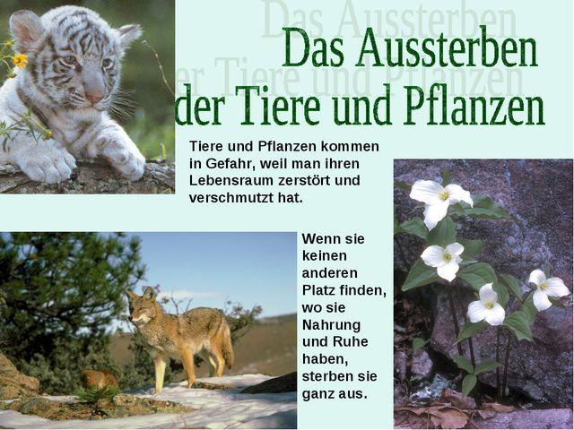Tiere und Pflanzen kommen in Gefahr, weil man ihren Lebensraum zerstört und v...