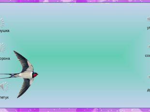 утка сова дятел кукушка ворона петух