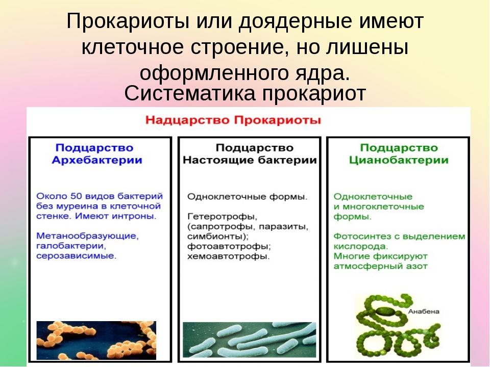 Прокариоты или доядерные имеют клеточное строение, но лишены оформленного ядр...