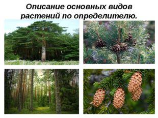 Описание основных видов растений по определителю.