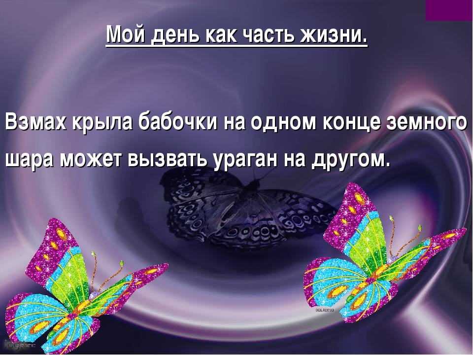 Мой день как часть жизни. Взмах крыла бабочки на одном конце земного шара мож...