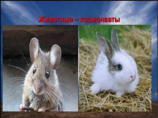 Животные – космонавты