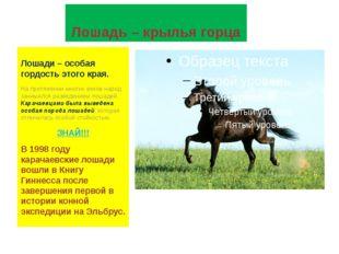 Лошадь – крылья горца Лошади – особая гордость этого края. На протяжении мног