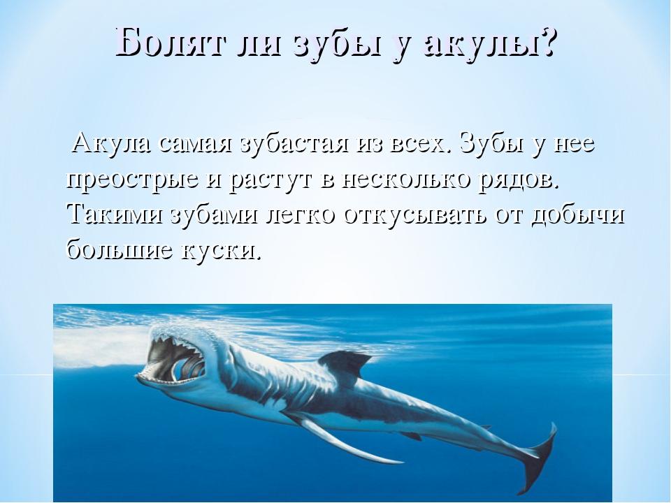картинка у акулы зуб болит это