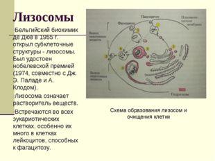 Лизосомы Бельгийский биохимик де Дюв в 1955 г. открыл субклеточные структуры