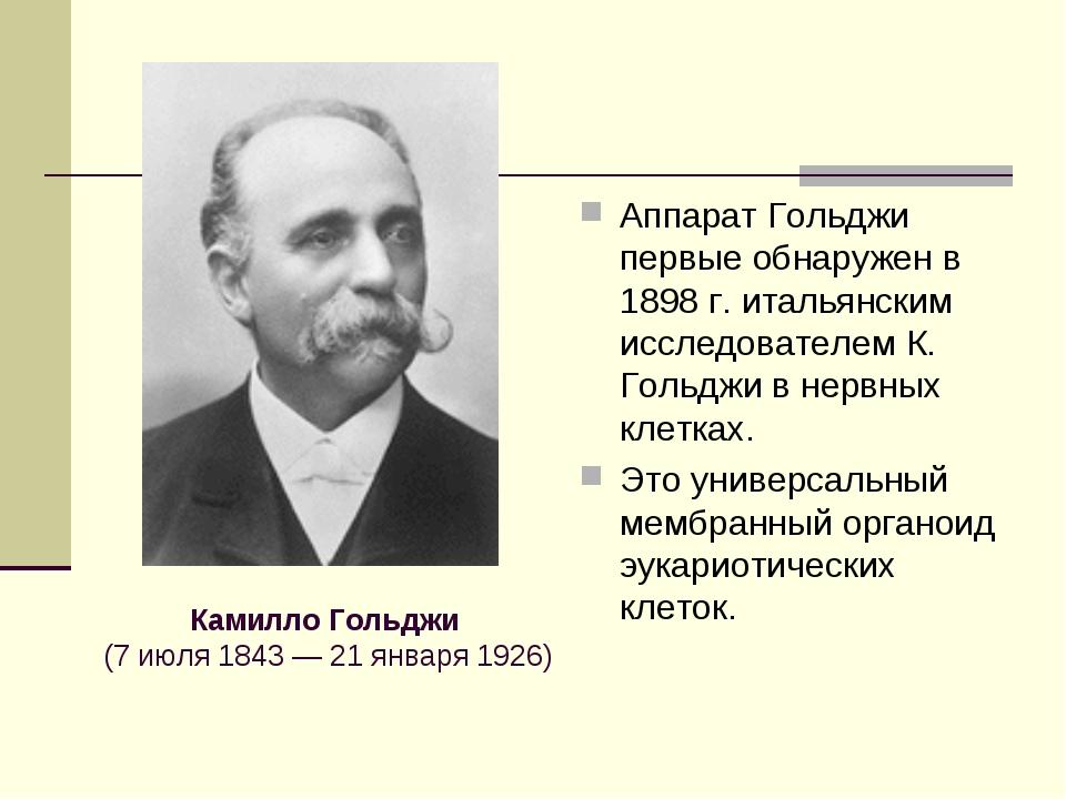 Аппарат Гольджи первые обнаружен в 1898 г. итальянским исследователем К. Голь...