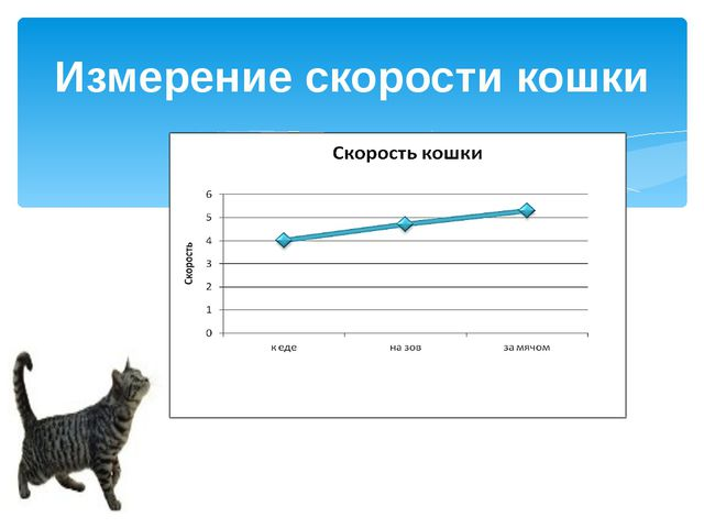 Измерение скорости кошки