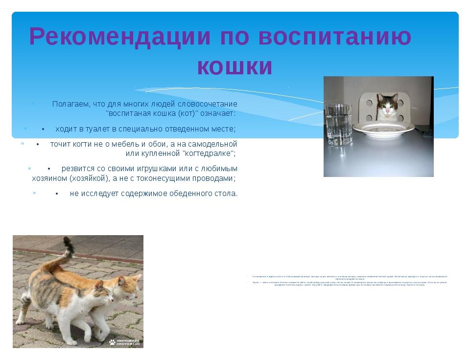 Рекомендации по воспитанию кошки Полагаем, что для многих людей словосочетани...