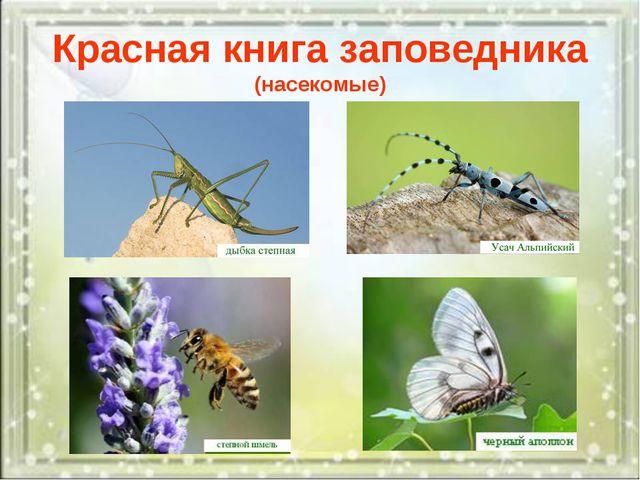 Красная книга заповедника (насекомые)