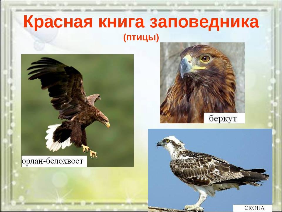 Красная книга заповедника (птицы)