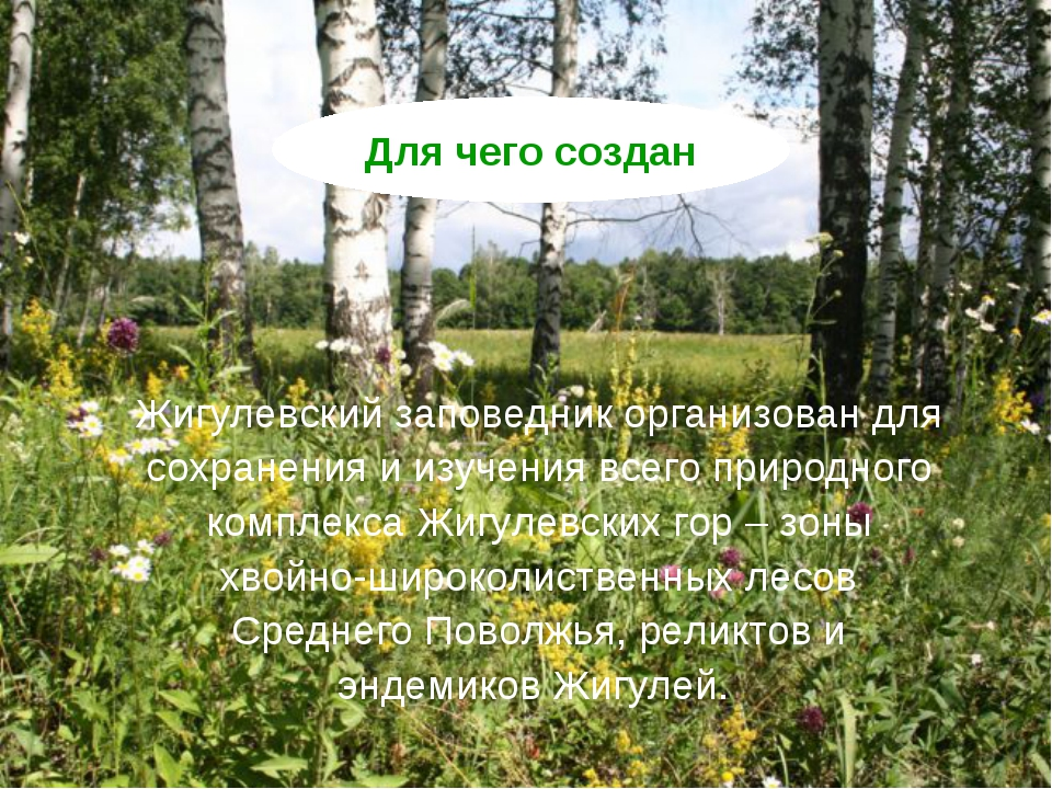 Жигулевский заповедник организован для сохранения и изучения всего природного...
